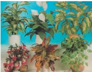 کتاب آشنایی با گیاه شناسی
