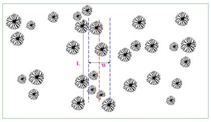 نمونه برداری به روش خطی یا ترانسکت با ذکر مثال